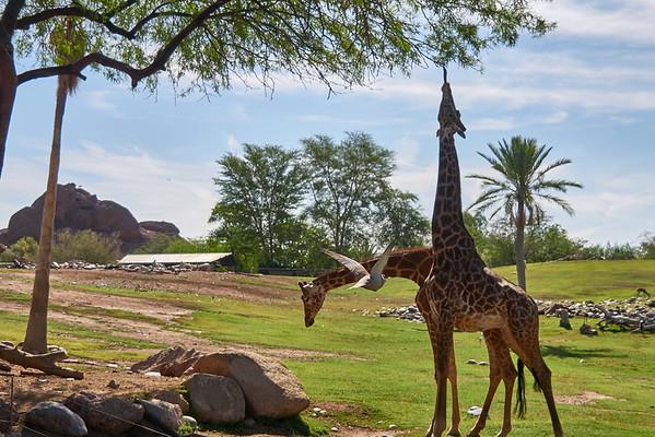 2016-04-22 Phoenix Zoo