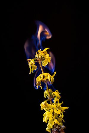 Flaming Flower 2