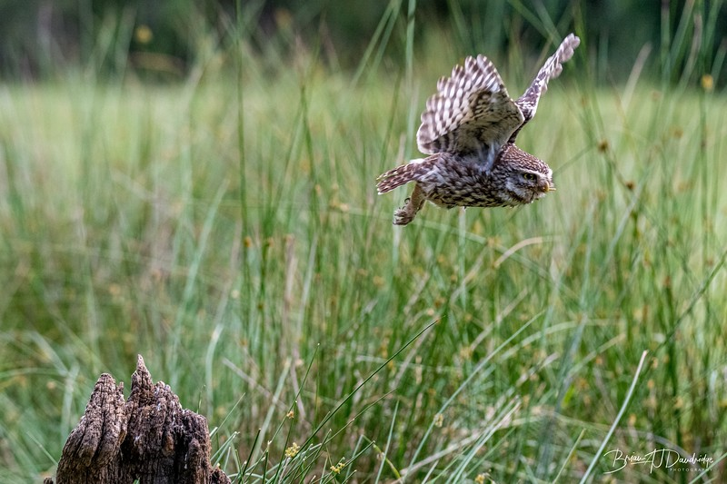 The Little Owl Shoot-6757.jpg