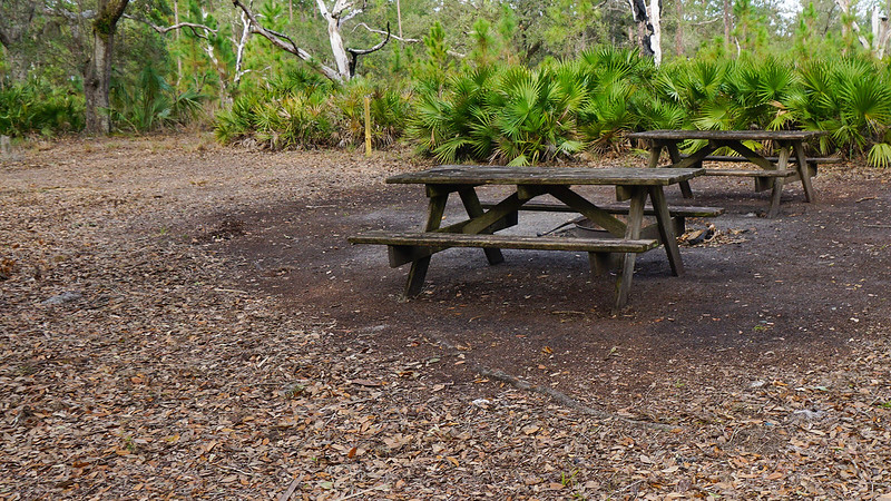 Picnic tables in a clearing
