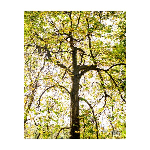 297_Tree_10x10.jpg