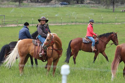 Clint Surplus Intro to Cows May 20 & 21,Crystal1 2016