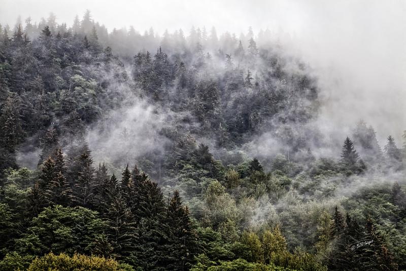 Fog in Juno, Alaska