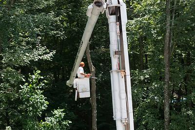 Dlugos Tree Service