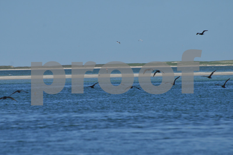 Pictues from cape and father day 132.JPG