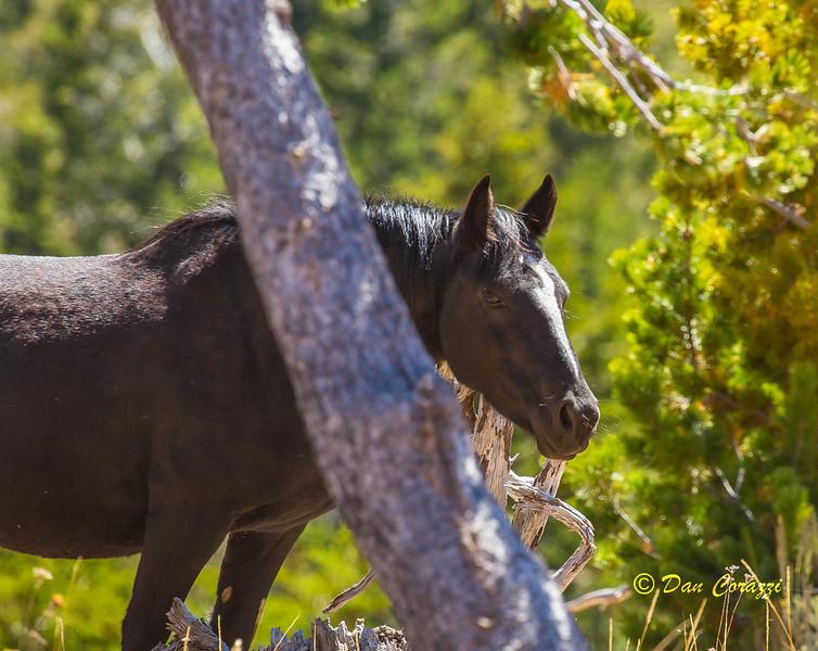 Horse & Tree-1a.jpg