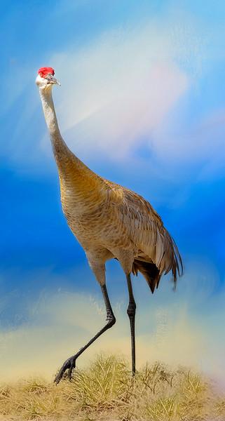 crane_DSC0121-copy.jpg