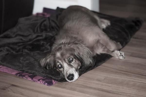 Susie Laying Around (RIP)