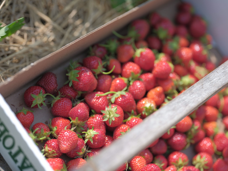 June 17, 2018 - Strawberry Picking for Fathers Day-214.jpg