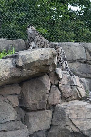 8.20.16 Zoo a la Carte