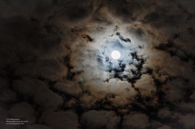 Moonlight Lace