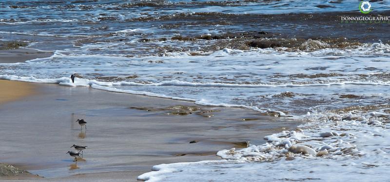 Maalaea Bay beach birds