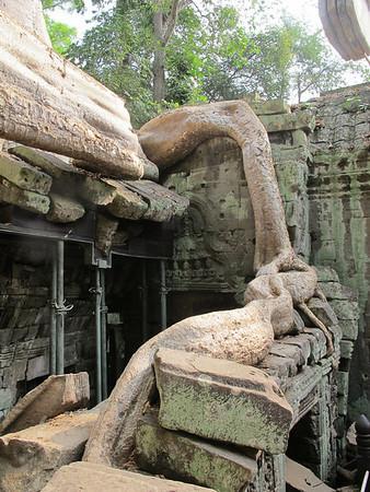 Ta Prohm, Siem Reap province, Cambodia.