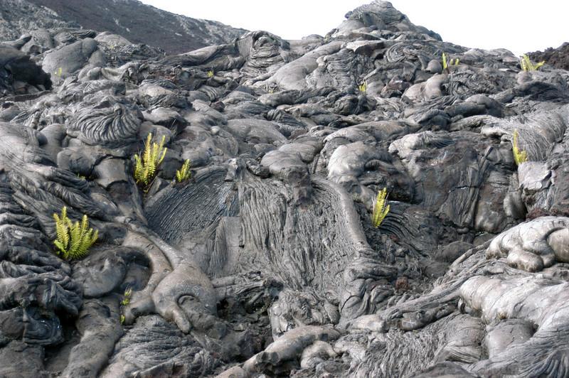 266- 20080412- Hawaii 15- Volcano Nat'l Park DSC_3134.jpg