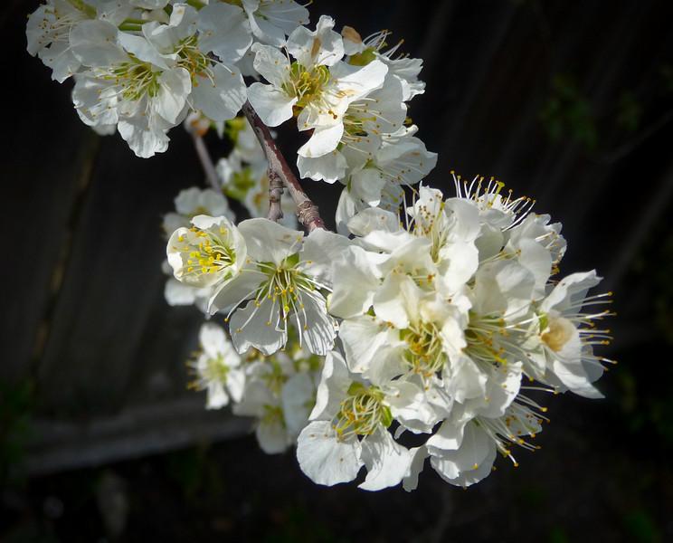 spring flowers-1000749.jpg