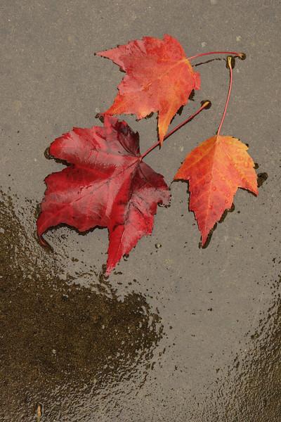 Fall leaves on wet concrete.jpg