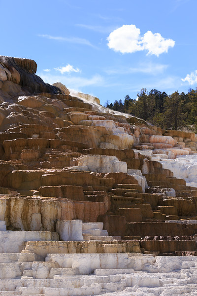 Mammoth Hot Springs 009