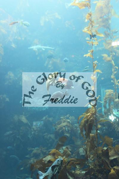 Aquarium 20132.jpg