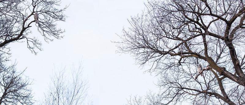 J160-Orysa Stein-The Two Owls.jpg