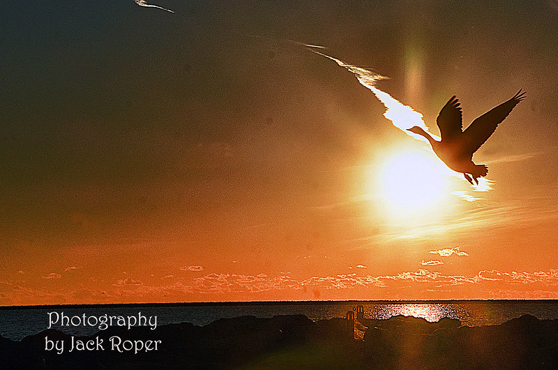 GOOSE IN SUNRISE .... _7168.jpg