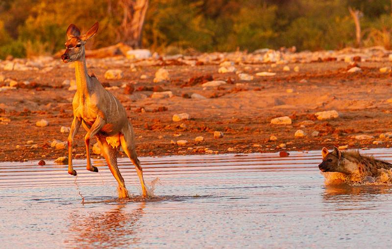 Kudu escape 2