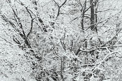 First Snowstorm_2014