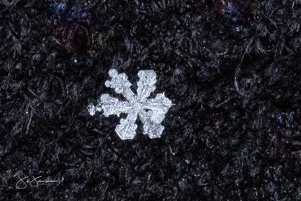 snowflakes-1476.jpg