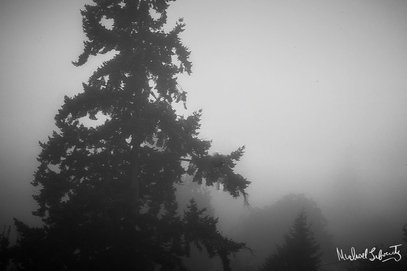 more fog (1 of 1).jpg
