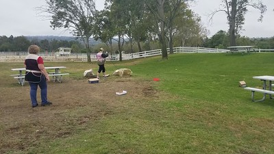 Nosework Practice at the Park