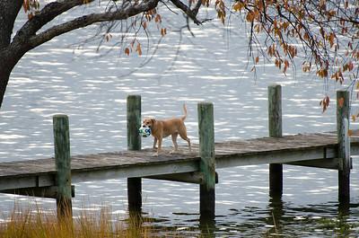 Doggone Thanksgiving 2016