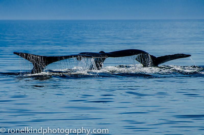 Whales-0105-7.jpg