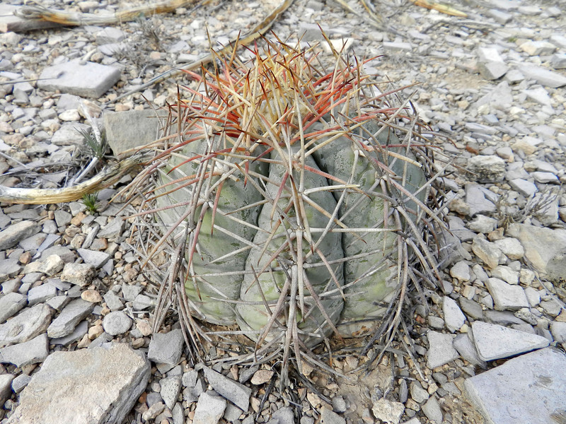 Cactus small short2.jpg