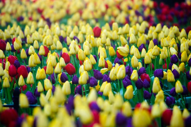 yellowsandreds.jpg