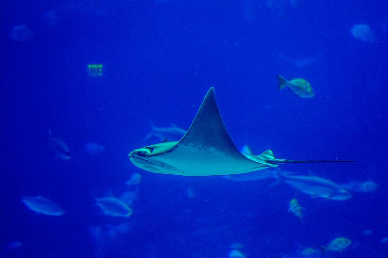 GA Aquarium with Linc, Ali & Abe-69.jpg