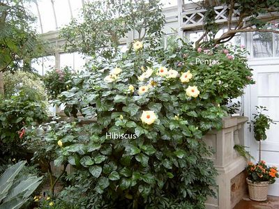 Duke Italian Garden