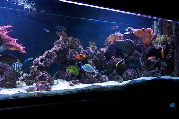 Aquarium 3 -22-09