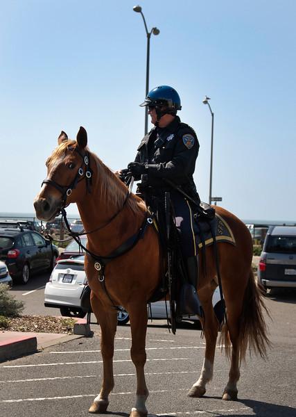 sfpd horse.jpg