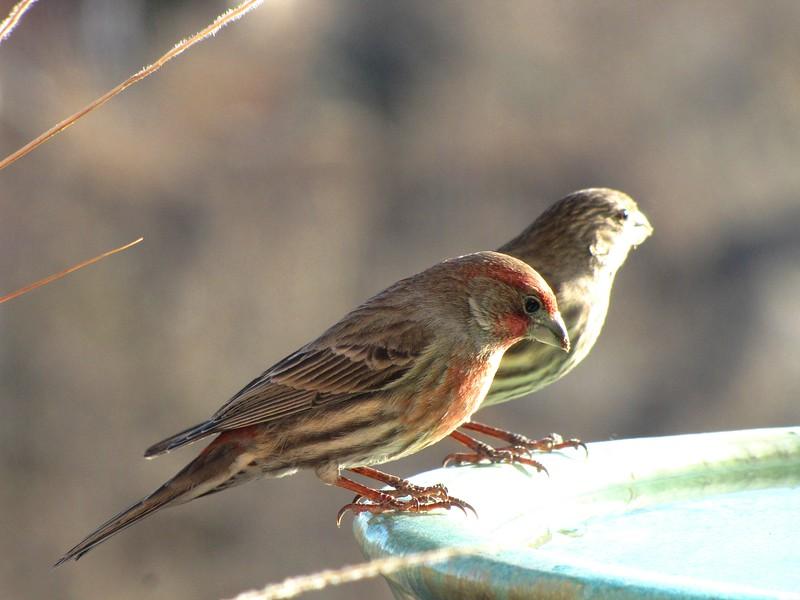 birds (172).jpg