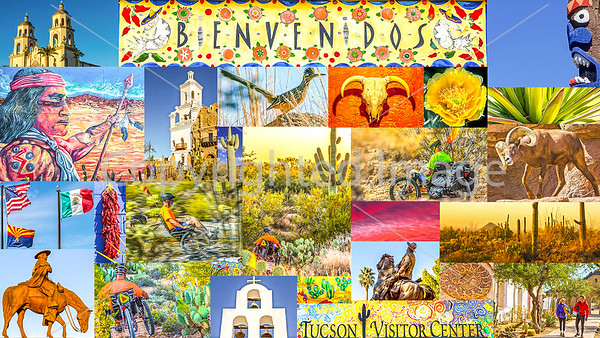 Tucson & Saguaro National Park - by Recumbent - Postcard