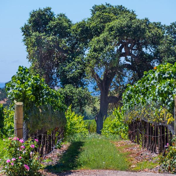 Fess Parker Winery_Los Olivos-9652.jpg