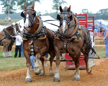 2010 Horse Pull