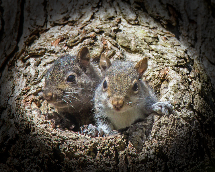 Two Squirells in a Tree