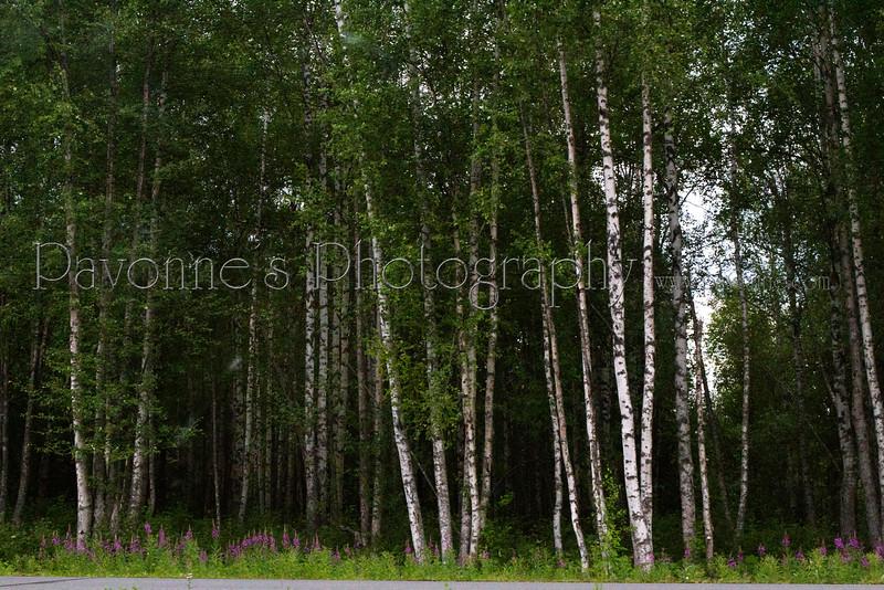 Alaska 4155.jpg