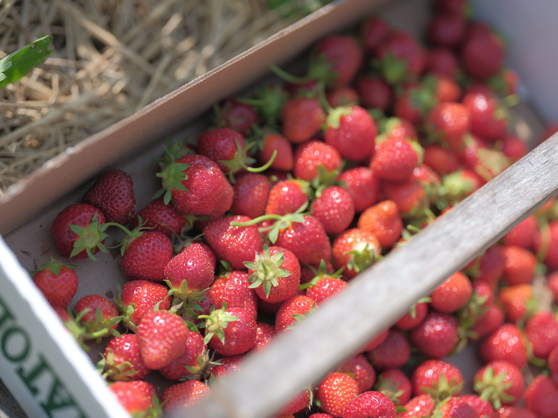 June 17, 2018 - Strawberry Picking for Fathers Day-213.jpg