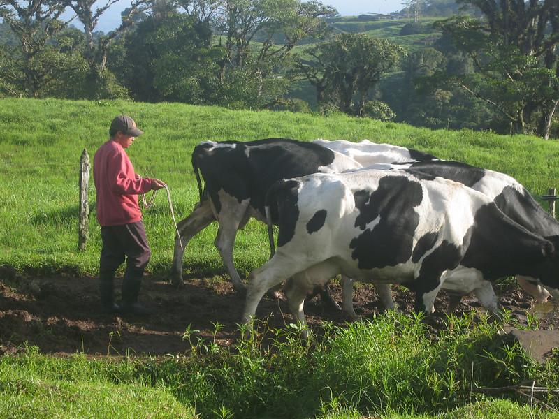 Costa Rica 08(2) 008.jpg