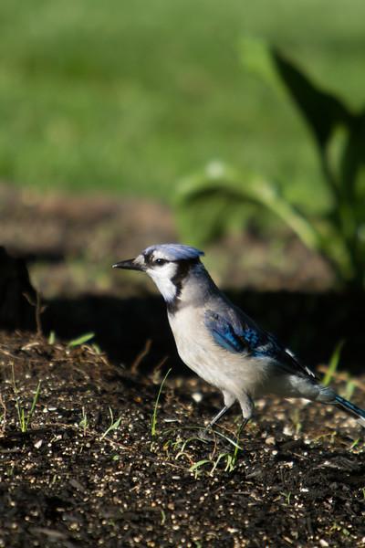 Birding_Rochester_061312_019.jpg