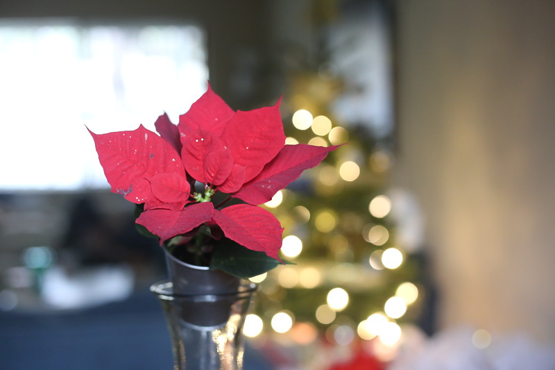 2019-12-22_ChristmasDecor-4403.JPG