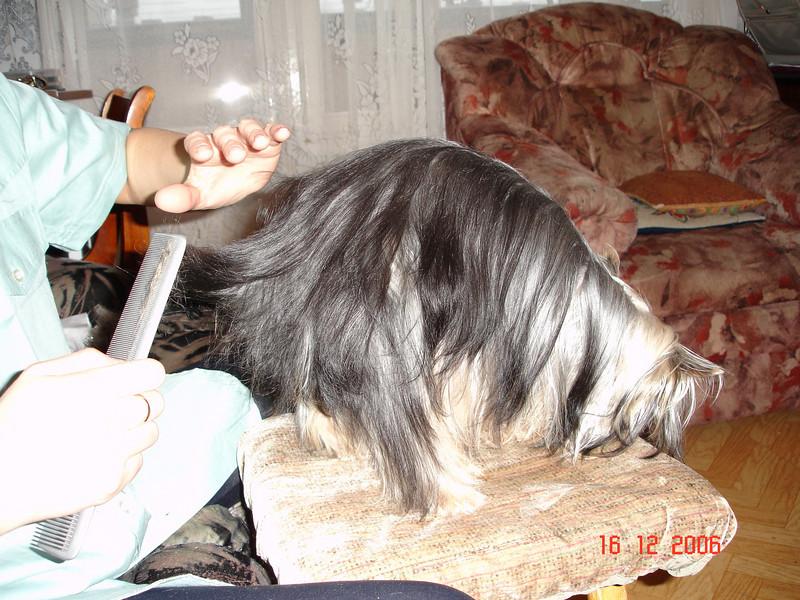 2006-12-16 Мегги 01.JPG