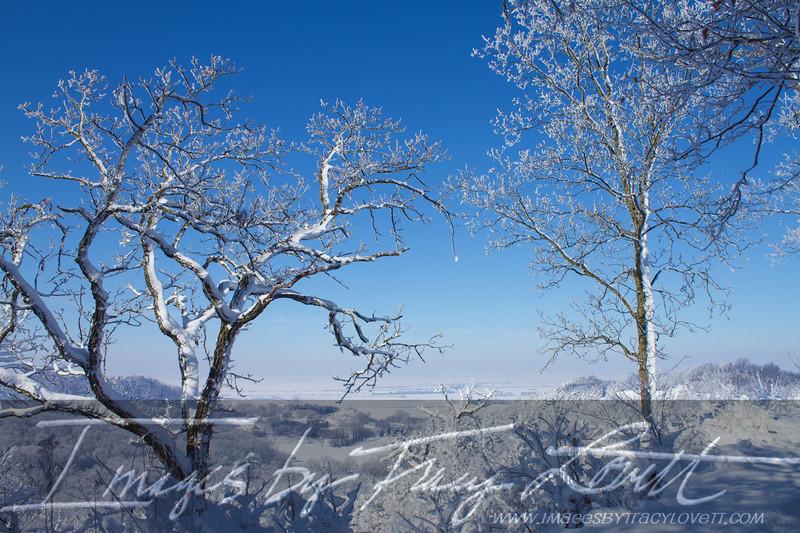 snow_3429 copy.jpg