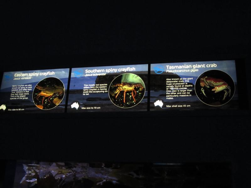 Sydney - Sydney Aquarium-60.JPG